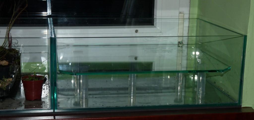 półka w akwarium