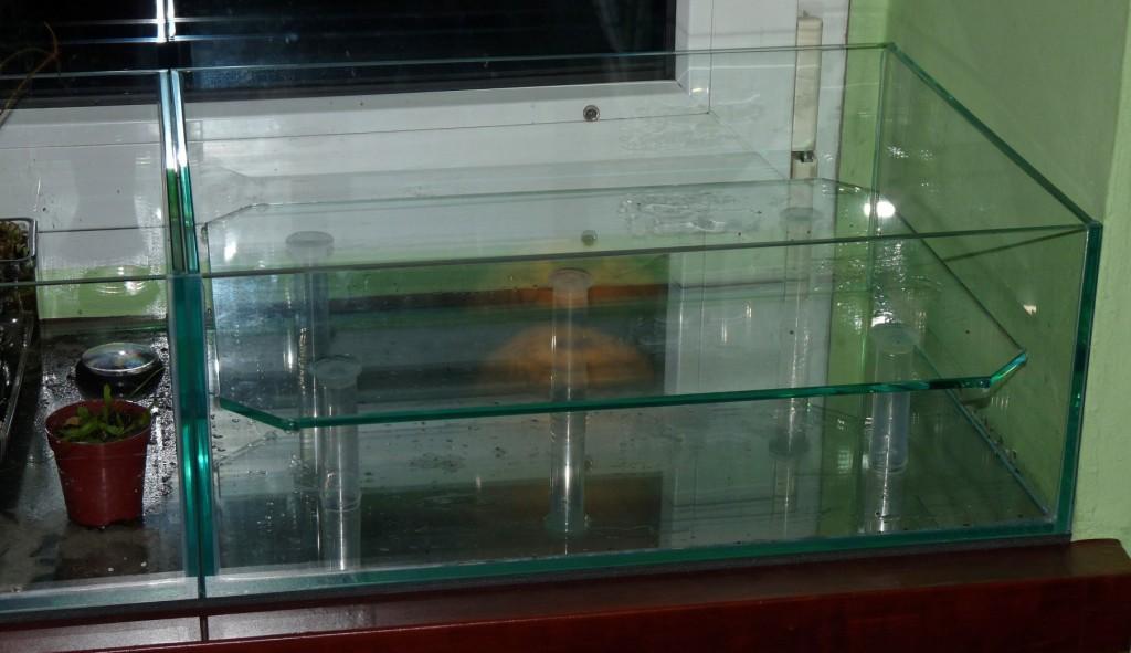półka w akwarium 2