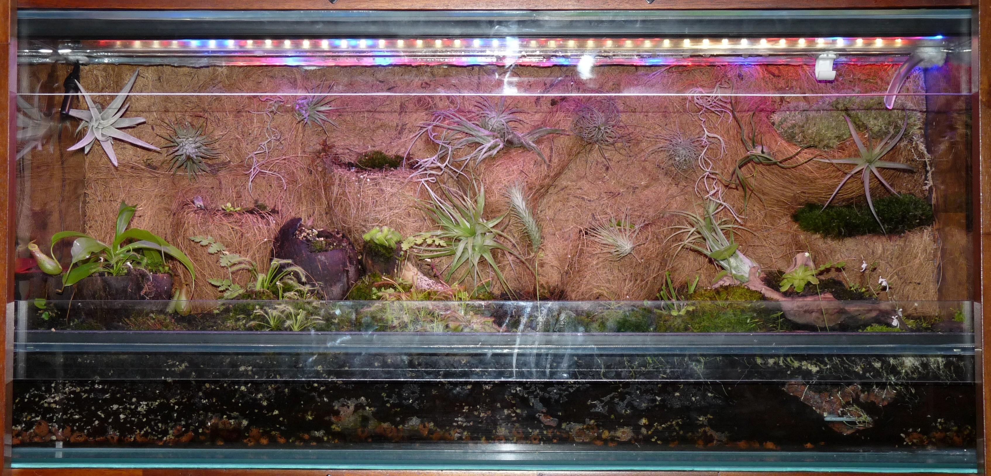 Terraium z owadożerami i oplątwami