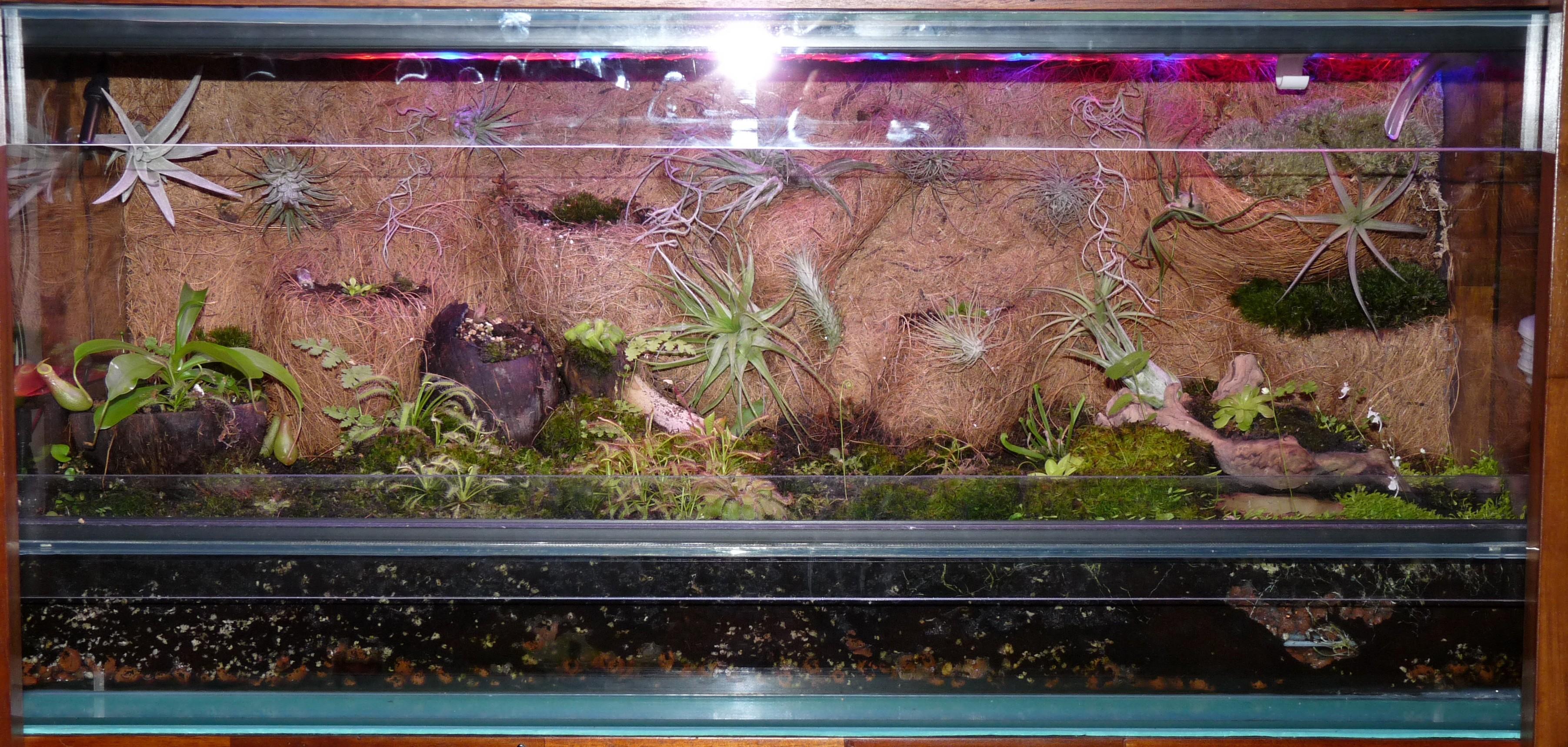 terrarium z tillandsiami i owadożernymi