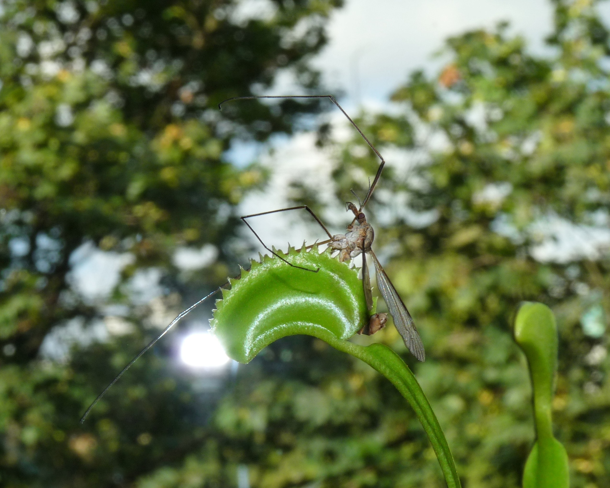 upolowany komar
