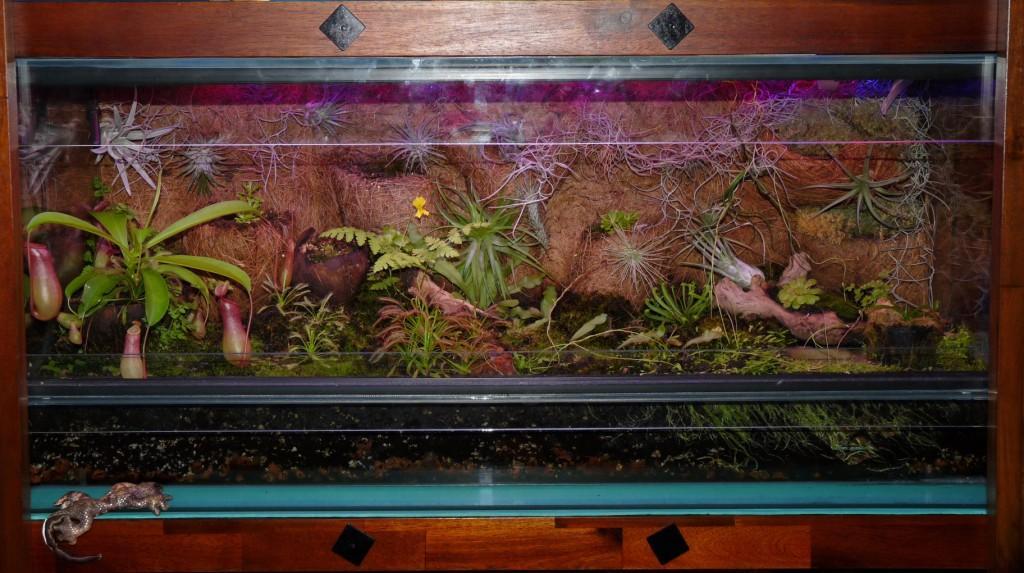tak dzisiaj wygląda owadożerne terrarium