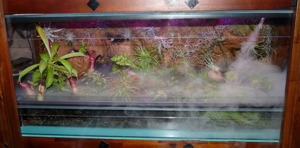 terrarium z roślinami owadożernymi i oplątwami