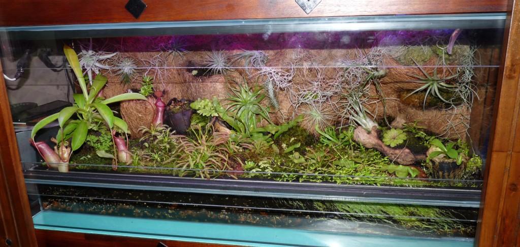 terrarium z roślinami owadożernymi