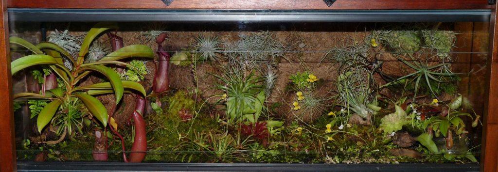 utricularia yellow1