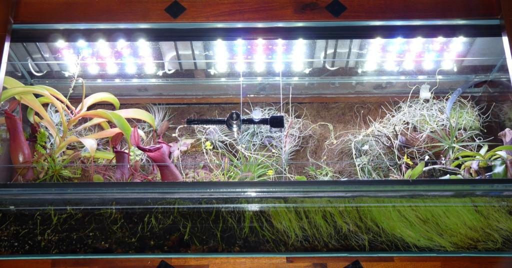 Nowe Power LED w terrarium