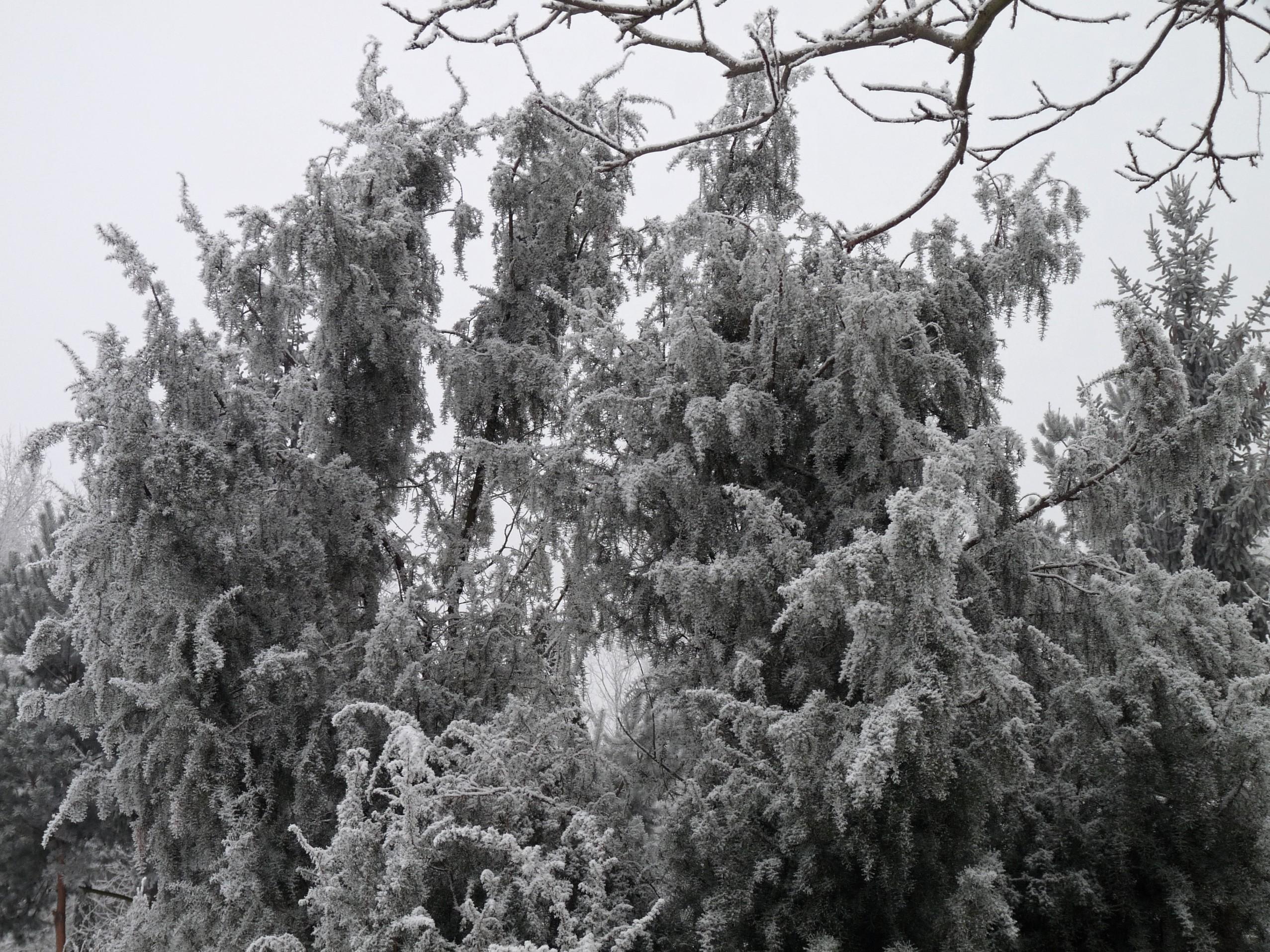 Zima 2017 4