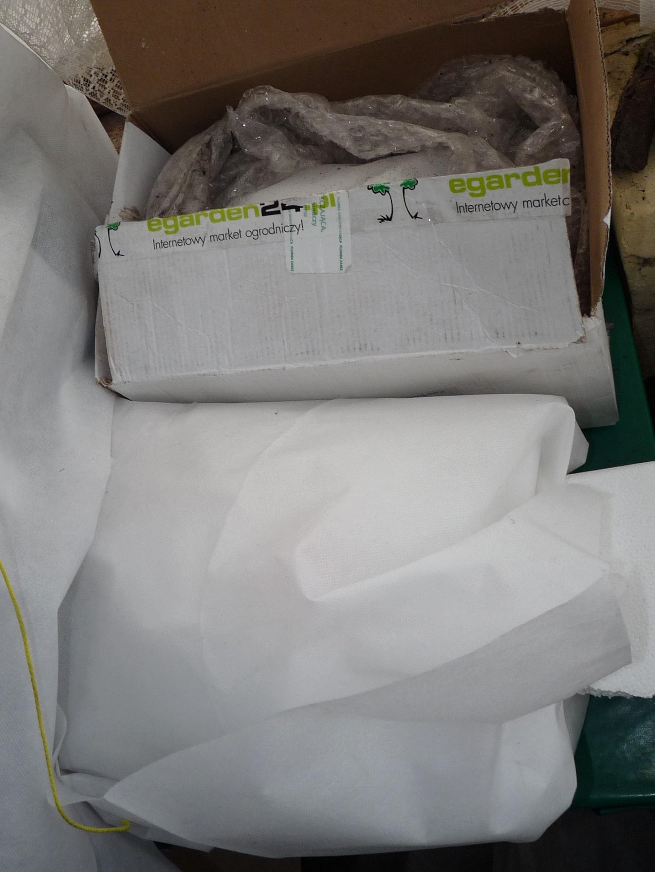 Zapakowane zimowo rośliny2