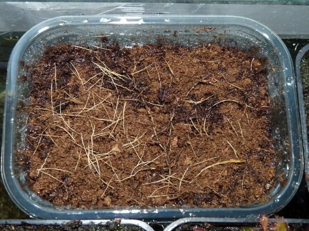 inkubator nasion9