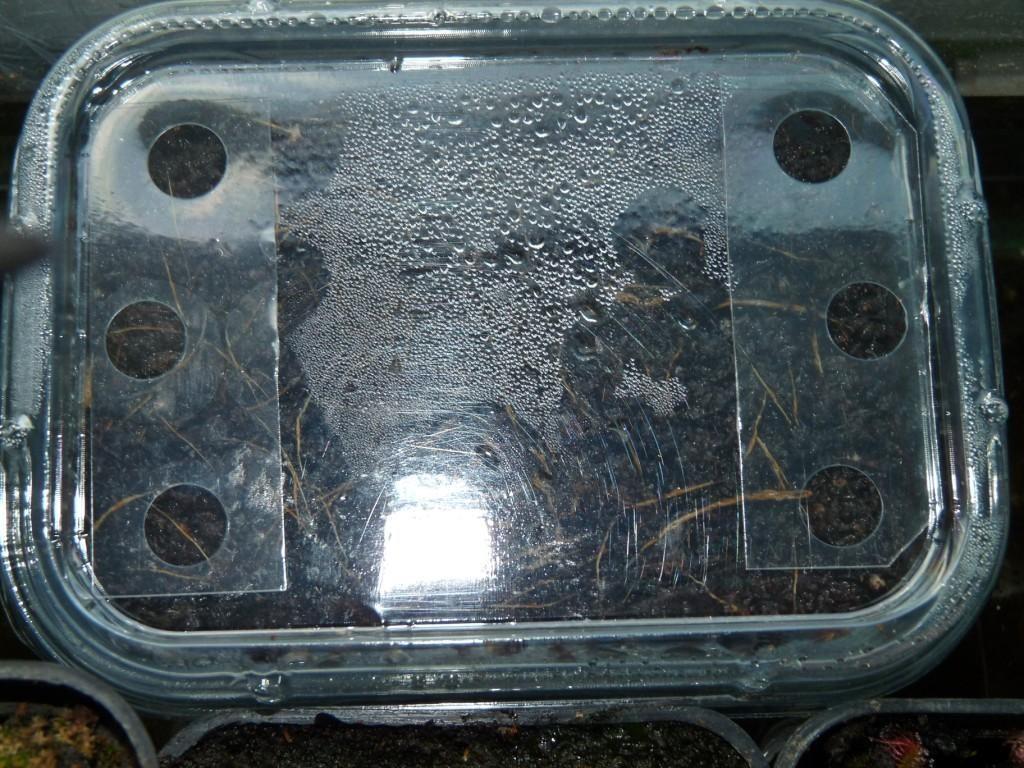inkubator nasion9a
