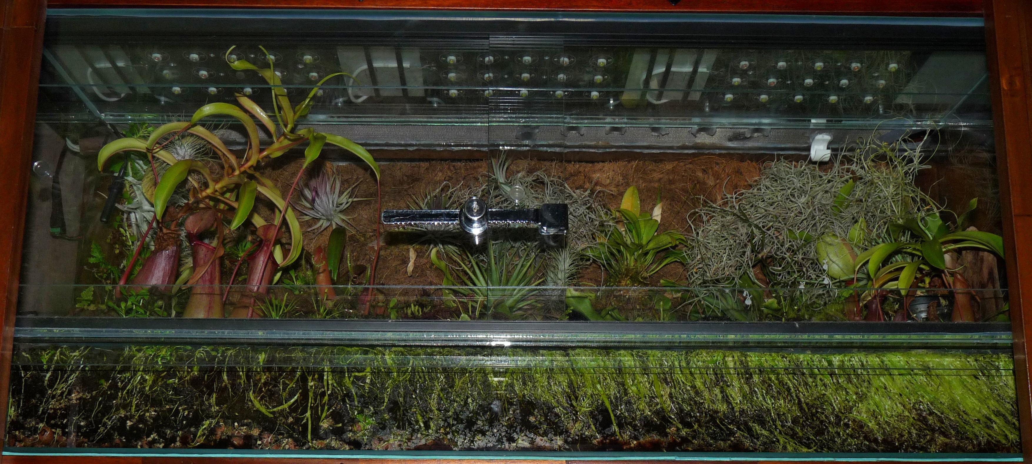 Widok terrarium z ekspansją pływaczy