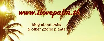 interesują Cię palmy? kliknij tu