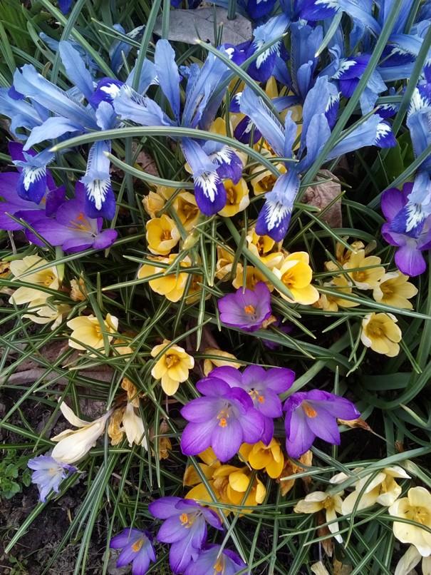 kwiatkiwiosenne1